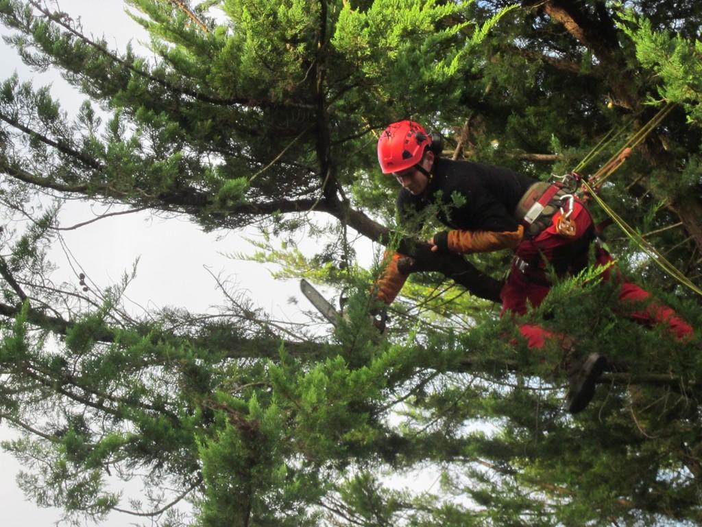 Entretien vent des jardins for Reglementation elagage des arbres